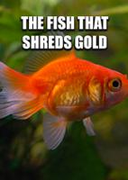 The Fish That Shreds Gold