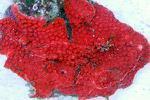 लाल गुलदस्ता ( एक लघु कथा )