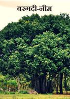 बरगदी-नीम